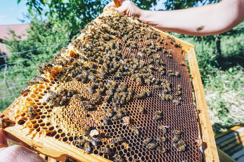 Bio Bienenwaben
