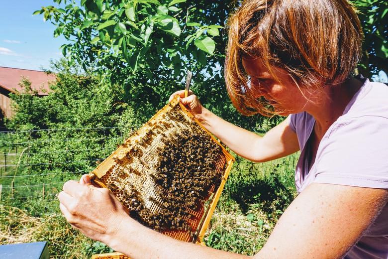 Bienen Bio Imker Hof Hoellwangen